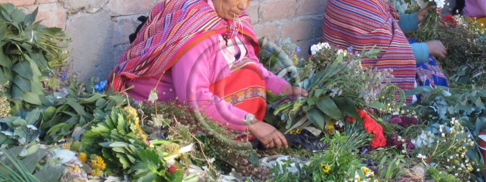 c_marche-challwa-plantes-medicinles-f-canard